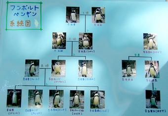 ペンギン系統図