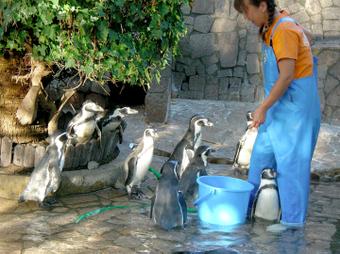 ペンギン給餌タイム