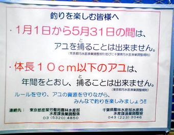 東京都内水面漁業調整規則並びに千葉県水面漁業調整規則により、「1月1日~5月31日の間、鮎を捕ることはできません」。<br /> 東京都内水面漁業調整規則により「体調10cm以下の鮎は、年間を通し、捕ることはできません」。