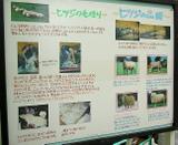 羊の毛展示1