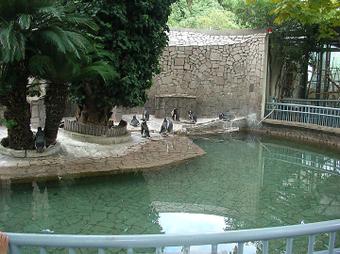 ペンギンプール全景