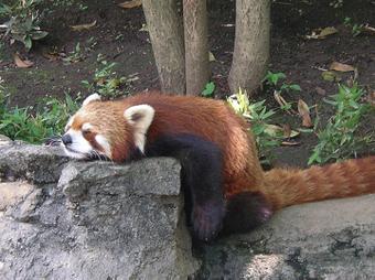 Sleepy_buna01