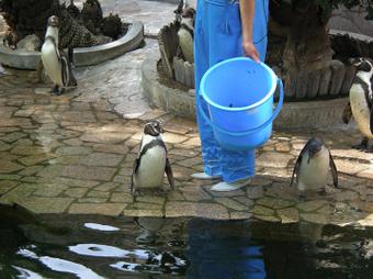 フンボルトペンギンのお話