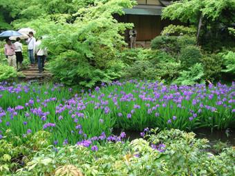 根津美術館 館内庭園