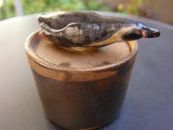 フンボルトペンギンType2