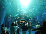 サメとエイの水中トンネル