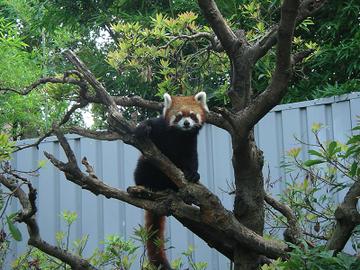 木の上でポーズ