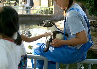 ペンギンにタッチ