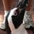 ケープペンギン (掛川花鳥園)