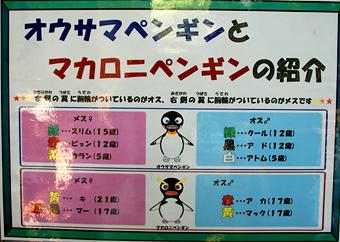 ペンギンの説明