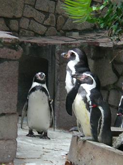 江戸川ペンギン