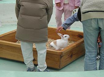 ふれあいコーナー(ウサギ)