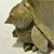 穴窯ペンギン「親子」