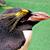 長崎ペンギン水族館2011年5月
