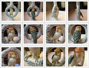 Parrot_thumbs