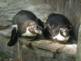 ペンギン_3