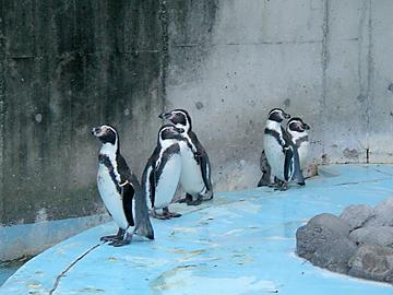 宮沢湖のペンギン