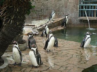 ペンギンエリア